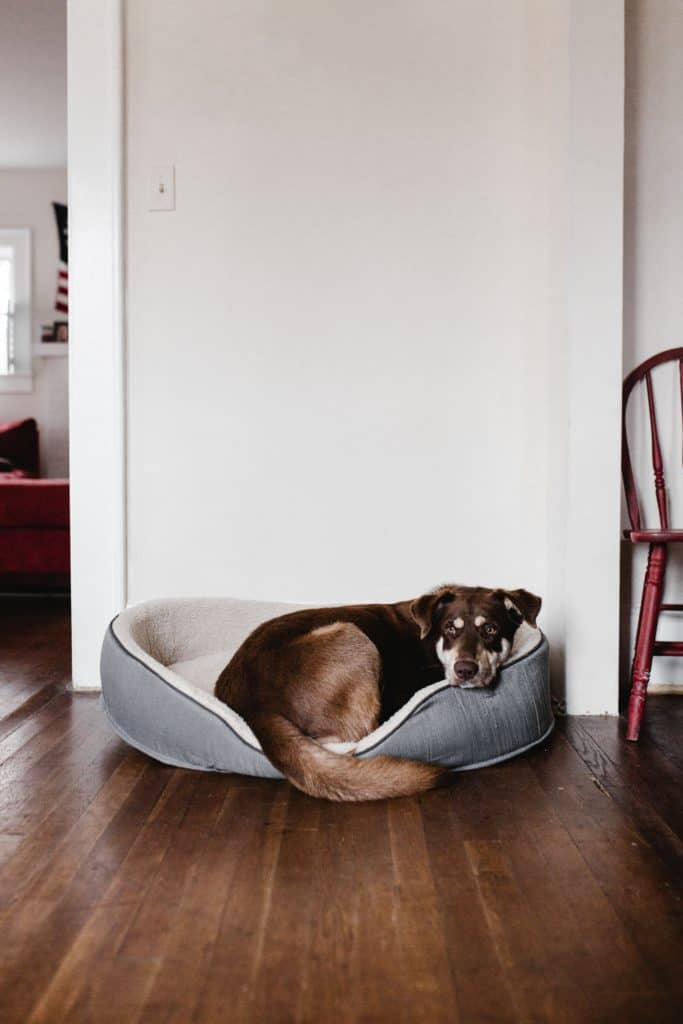 Canine Obesity: Managing Your Dog's Weight