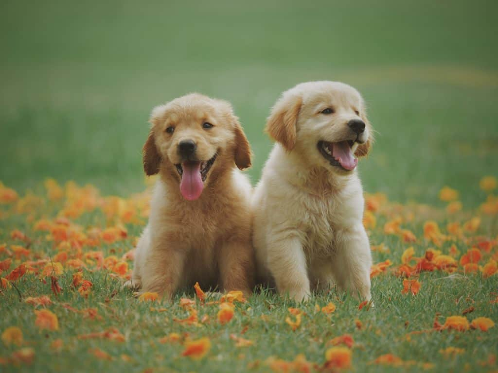 Why You Should Stop Dog Cloning