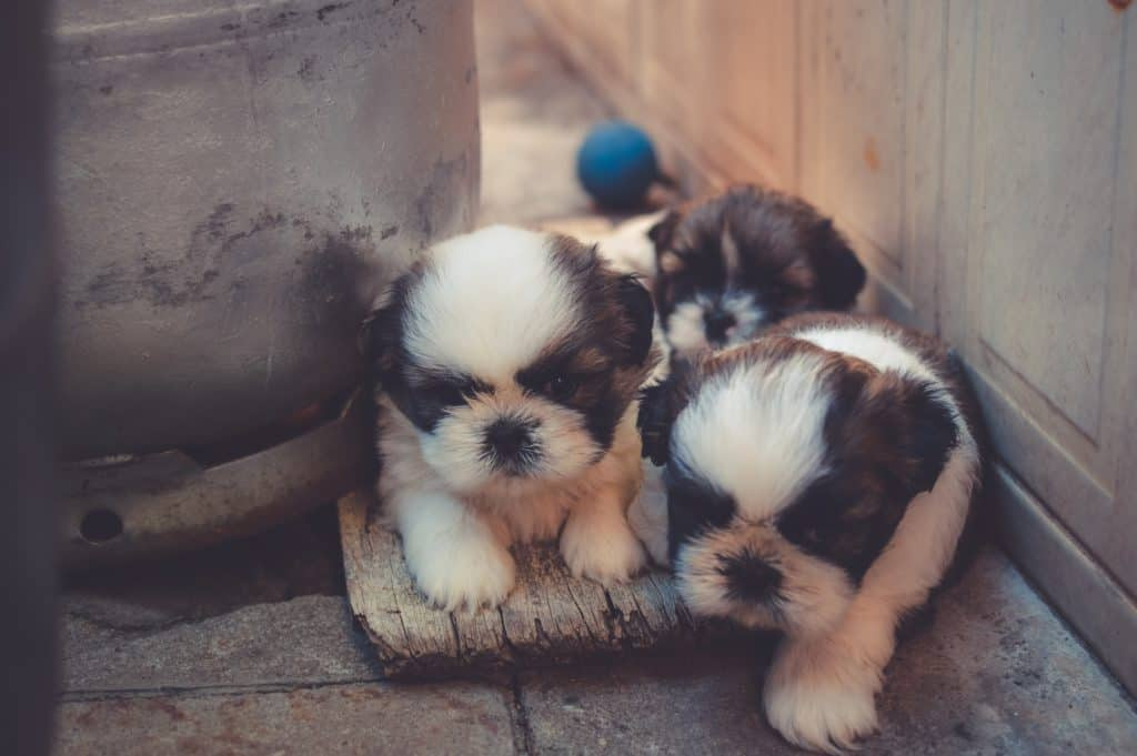 9 Effective Home Remedies For Mange In Puppies