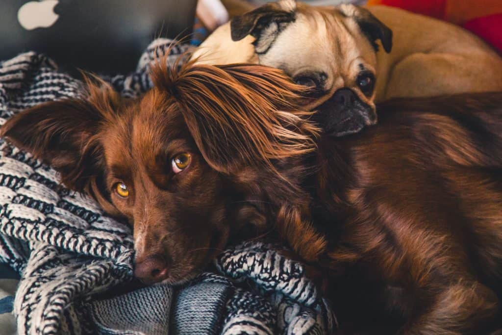5 Most Popular Tick And Flea Shampoo For Your Dog