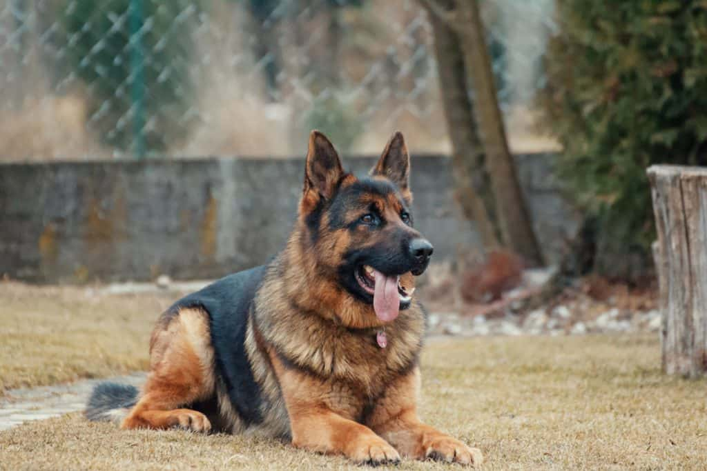 Grooming Products (Amazon): Types Of Dog Hair Trimmer
