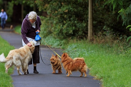 Causes And Treatment Of Dementia In Senior Dogs
