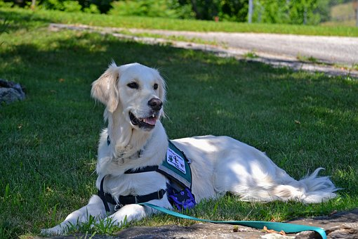 How Are Service Dogs For Anxiety Helpful