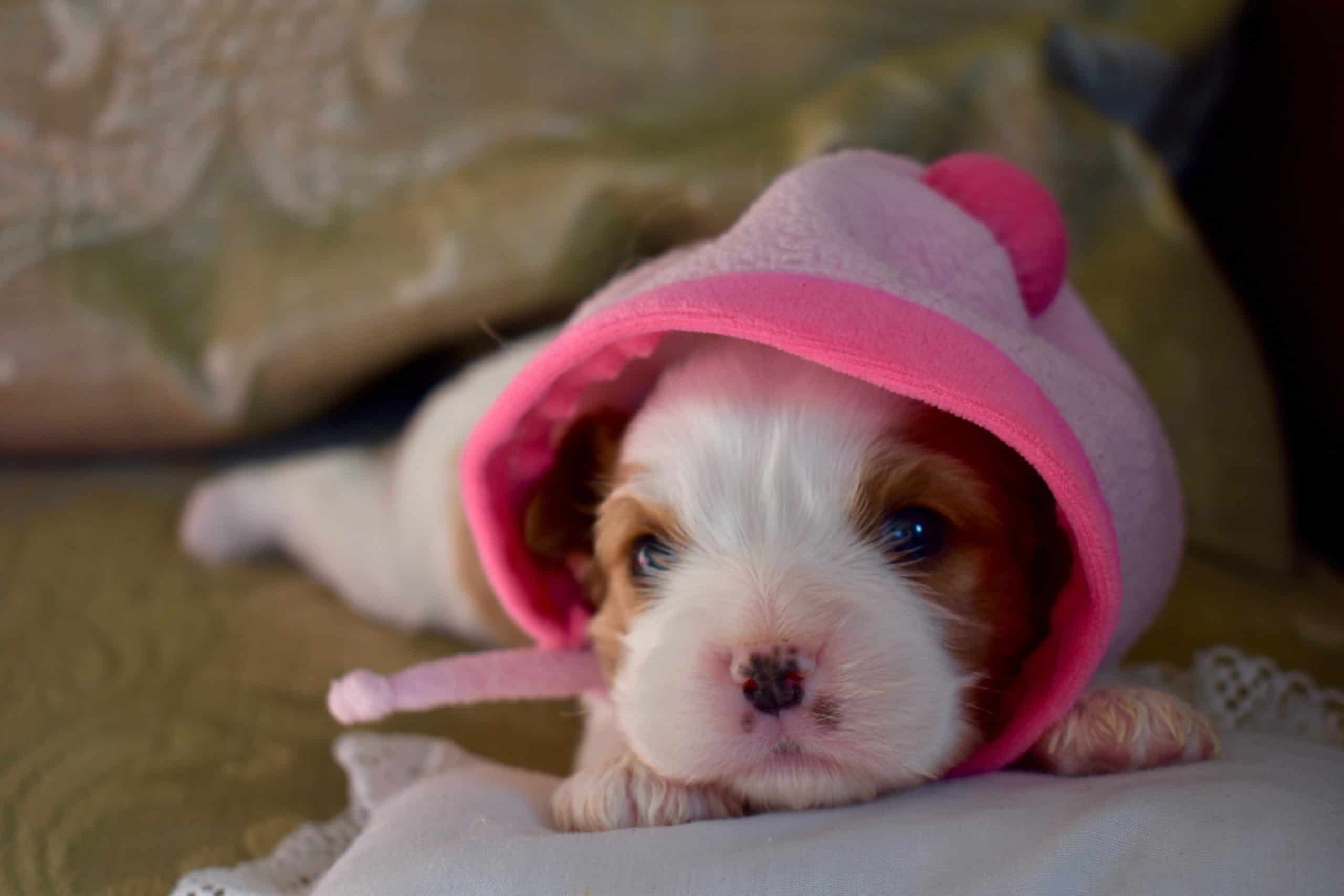 A Guide To Newborn Puppies Care Week by Week
