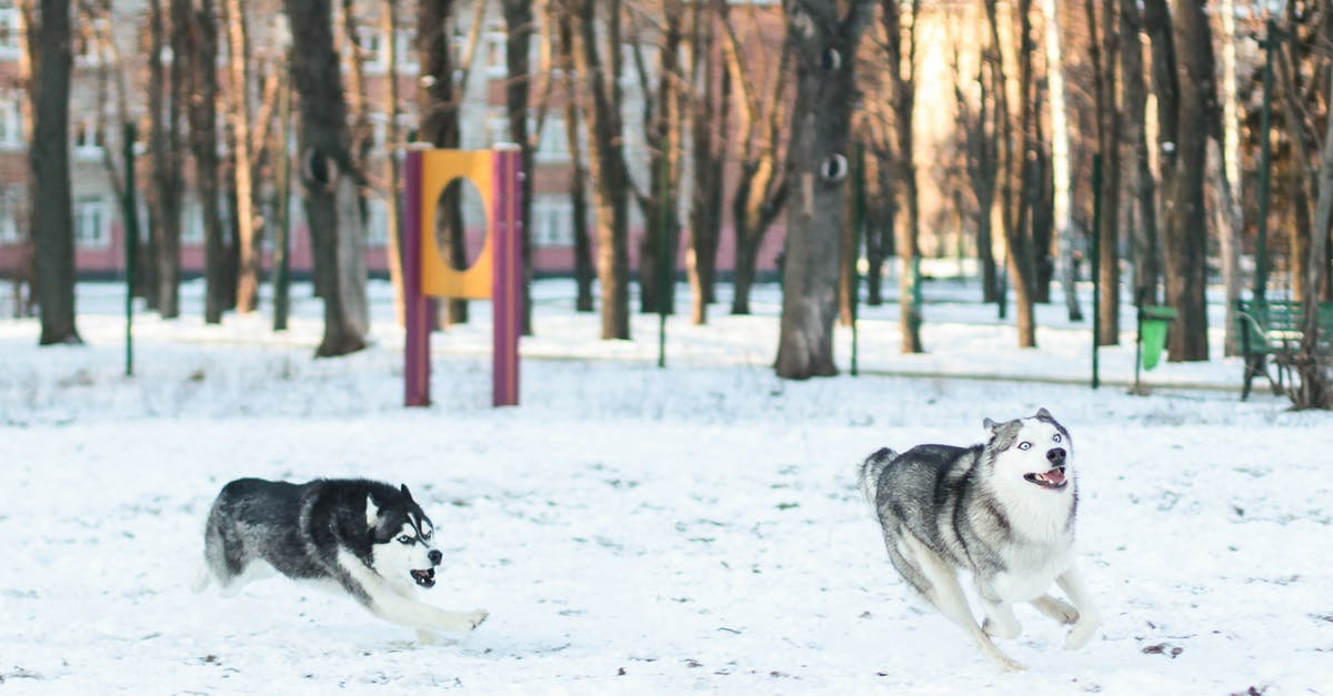 husky puppy guides
