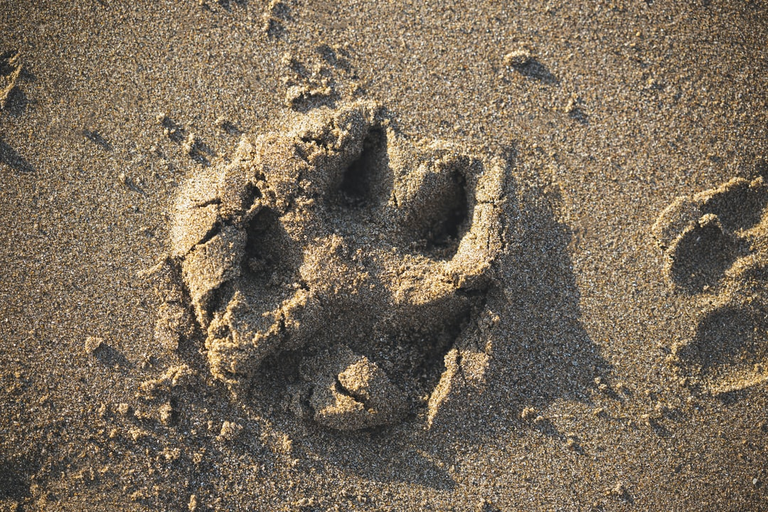 A person that is standing in the sand